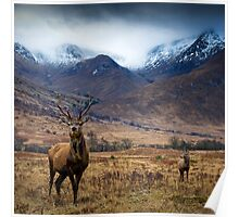 Glen Etive Red Deer Poster