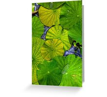 Waterlilies in HDR Greeting Card