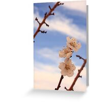 Apricot Blossoms Greeting Card