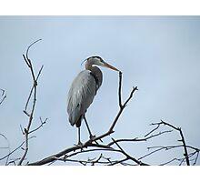 Crane watchin Photographic Print