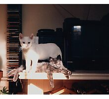 Adolescent Kittens Photographic Print