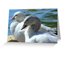 Snow Geese ~ Migrants Greeting Card