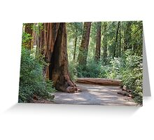 Big Basin Redwoods State Park Greeting Card