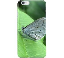 The Holly Blue iPhone Case/Skin