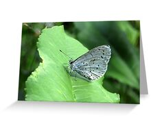 The Holly Blue Greeting Card