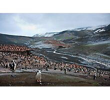Chinstrap Penguin Colony Deception Island Photographic Print