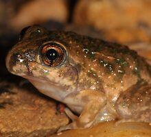 Bilingual Froglet by Catherine Whitehead