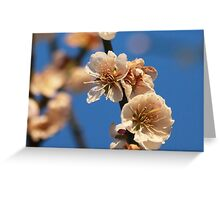 Blooming Blossoms Greeting Card