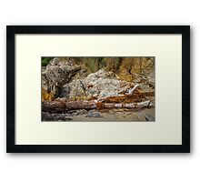 Driftwood and Seaweed Framed Print