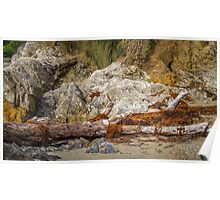 Driftwood and Seaweed Poster