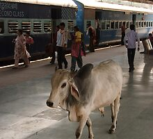 Holy Cow on Ranthambore Station platform by Christopher Cullen
