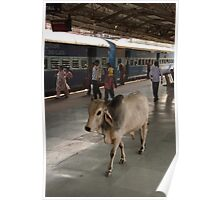 Holy Cow on Ranthambore Station platform Poster