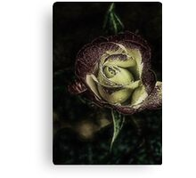 Enchanted Rose.... Canvas Print