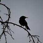 Honeyeater Sillouette by Amy Dee