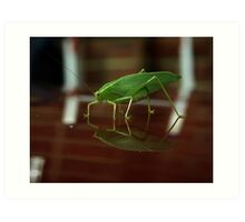 Reflections of a leaf insect Art Print