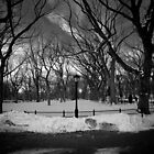 Central Park  by Lukas Carruthers