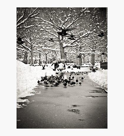 Pigeon Flight Photographic Print