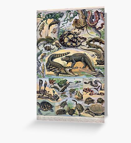Adolphe Millot Reptile Greeting Card