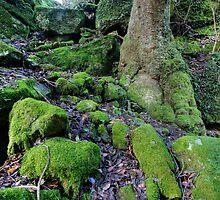 Moss by Bluesoul Photography