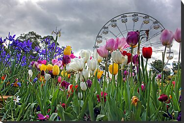 Flowers of  Floriade by Bluesoul Photography