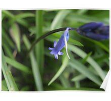 Bleu Belle Poster