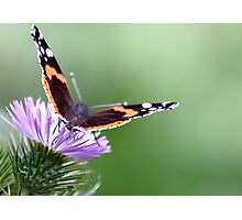 Butterfly haze Photographic Print