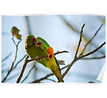 parrot eating moment Poster