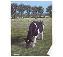 Cow in field at Throop,UK Poster