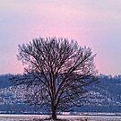 Winter Tree by barnsis