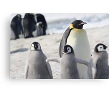 Penguins at Snow Hill Island Canvas Print