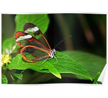 Greta Oto - Glasswing Poster