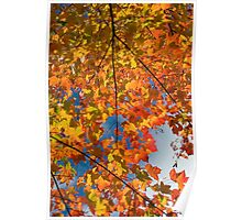Quebec fall, color - 2010 Poster