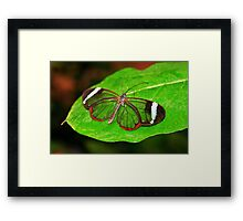 Glasswing With Open Wings Framed Print