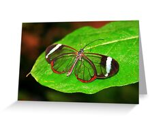 Glasswing With Open Wings Greeting Card