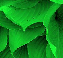 Dew Drops by David Schroeder