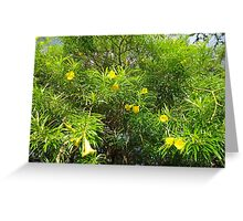 Yellow Oleander Greeting Card