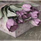 Tulip Bouquet by JulieLegg