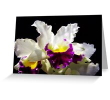 Orchid Collection - 2 Greeting Card