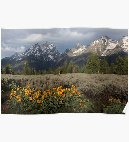 The Grand Teton & Mules Ears Poster