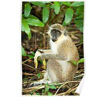 Monkey 1 Poster