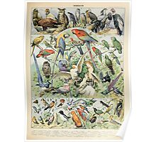 Adolphe Millot oiseaux A Poster