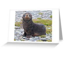 Got Fish??? (Antarctic Fur Seal Pup, South Georgia) Greeting Card