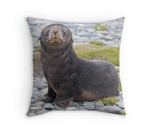 Got Fish??? (Antarctic Fur Seal Pup, South Georgia) Throw Pillow