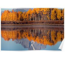 Aspens Aflame at the Oxbow Bend Poster