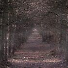 Bourne Wood No2 by Graydon Jones