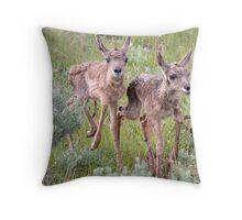 Antelope Fawns Romping Throw Pillow