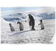 Emperor Penguins at Snowhill Island, Antarctica Poster