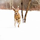Winter Weim by TingyWende