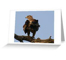 Tawny Eagle - Kruger National Park Greeting Card