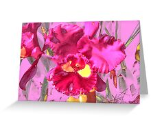 Orchid Collection - 4 Greeting Card